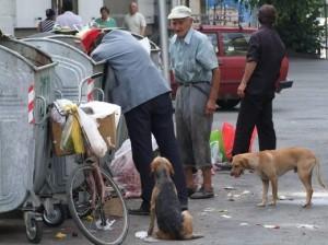 Ljudi i psi lutalice kraj kontejnera za smece sakuplaju otpad iz okolnih mesara i sa pijacnih tezgi nedaleko od Zelene pijace u Jagodini. Prema zvanicnim podacima oko 700.000 gradjana Srbije zivi ispod granice siromastva, 730.000 je nezaposlenih, a oko 50.000 osoba se hrani u narodnim kuhinjama. (BETAPHOTO/ALEKSANDAR DOBROSAVLJEVIC/DS)