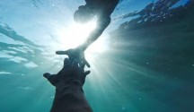 stock-footage-savior-rescuer-salvation-hand-man-drowning-saved-by-lifeguard-underwater-sun-shining-rescue-new