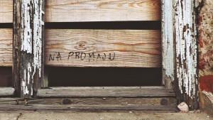 Fotografije-citalaca-Predrag-Trokicic_01-6