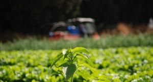 © Flickr/ StateofIsrael Даље: https://rs.sputniknews.com/analize/201611081108763775-poljoprivreda-srbija-propadanje/